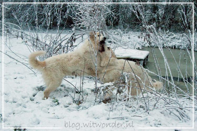 Noor-sneeuw